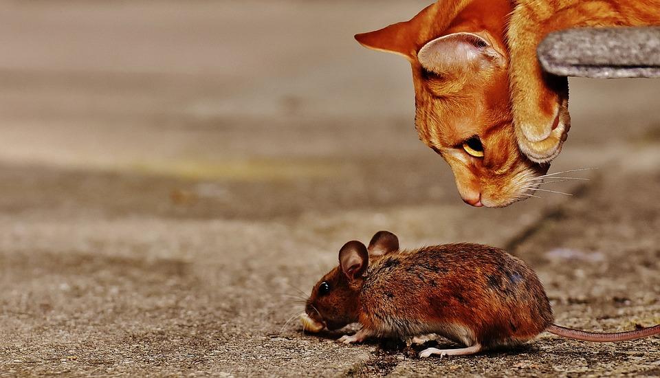Station d'appât pour rats AutoGate