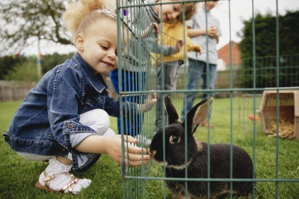 Quelle est la différence entre le lapin et le lièvre ?